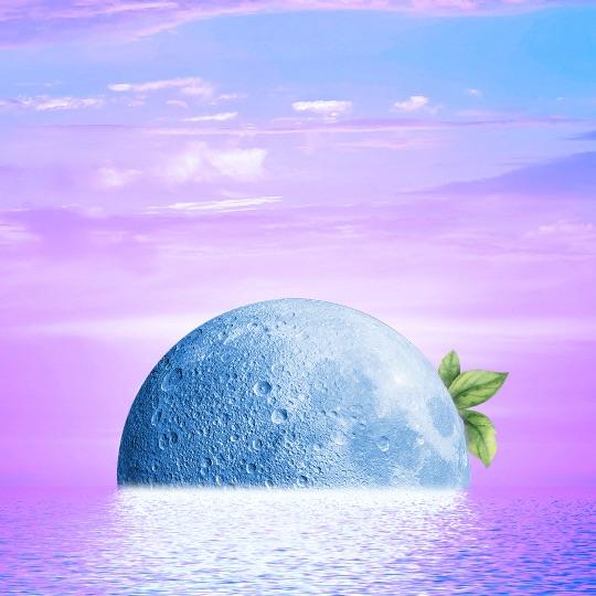 Blueberryjpg